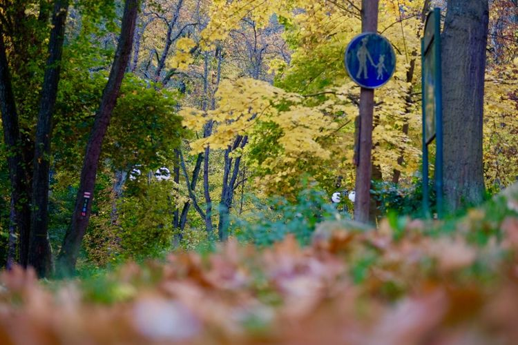 Plant Tree Forest Land Nature Autumn Growth Day No People Selective Focus Tranquility Beauty In Nature Trunk Tree Trunk Scenics - Nature Sign Leaf WoodLand Outdoors Tranquil Scene Change