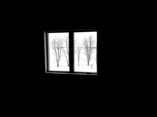 QVHoughPhoto Moorhead Minnesota Winter Window Trees Blackandwhite IPhoneography IPhone4s