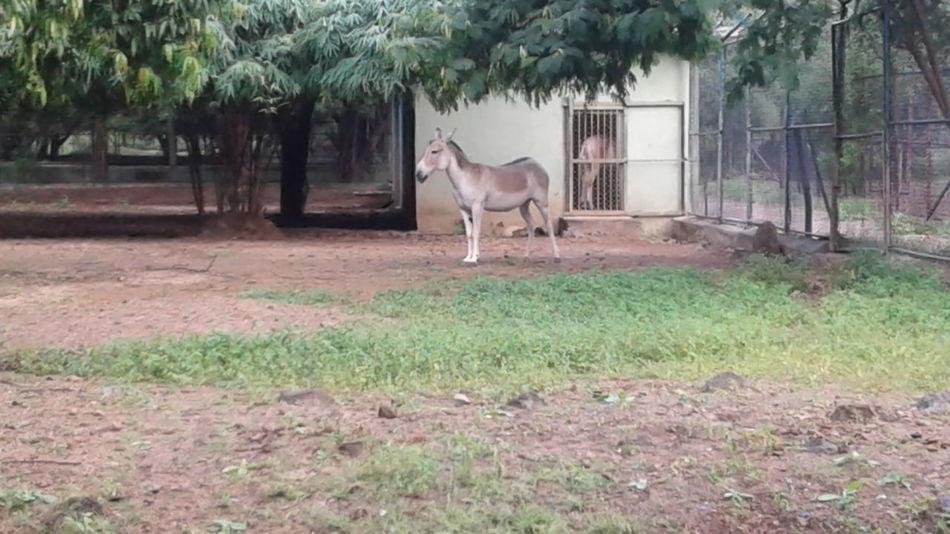 At zoo skarbagh