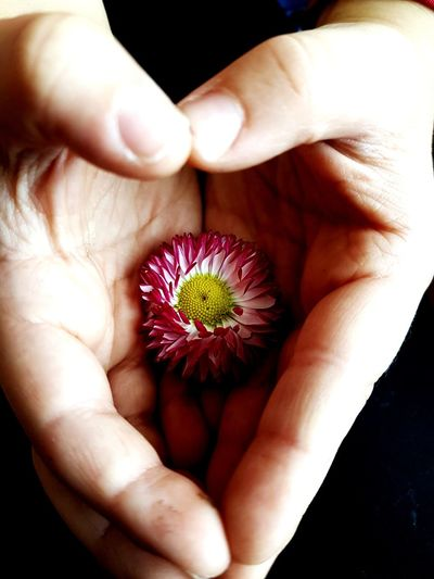 child's hand, flower, feelings EyeEm Selects Human Hand Flower Black Background Close-up