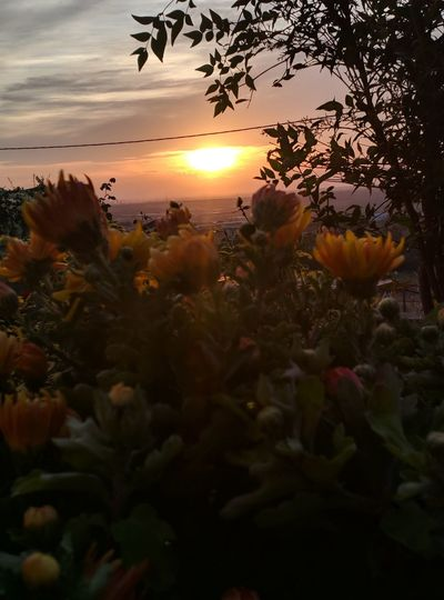 Close-up of flowering plants against sunset sky