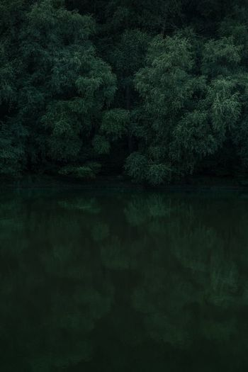 Deep thought Green Green Color Tree Plant Water Backgrounds No People Nature Tranquility Lake Beauty In Nature Reflection Scenics - Nature Tranquil Scene Textured  Outdoors Textured Effect Freshness