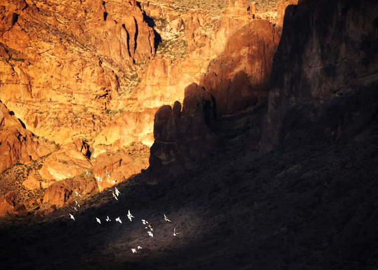 View of birds in cave