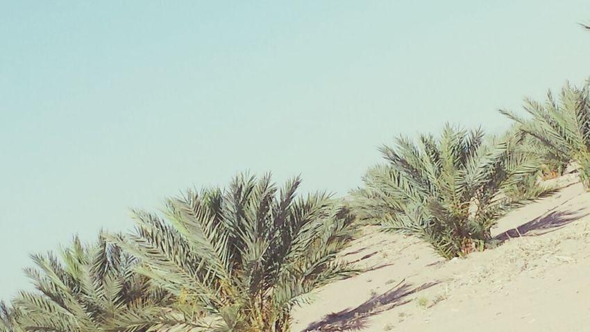 Palm Trees ♡ Taking Photos