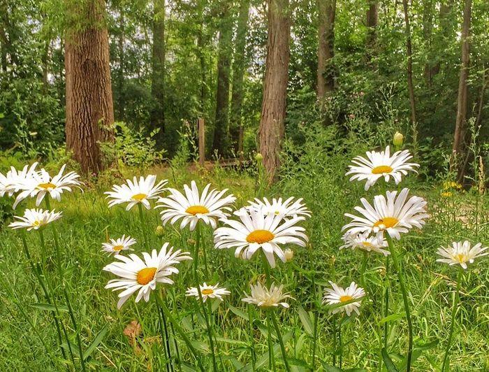 Full frame shot of white flowers blooming in park