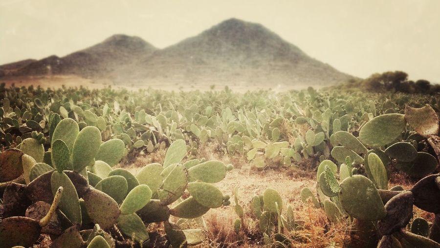 Movileando Por El Mundo Desert Landscape Summertime