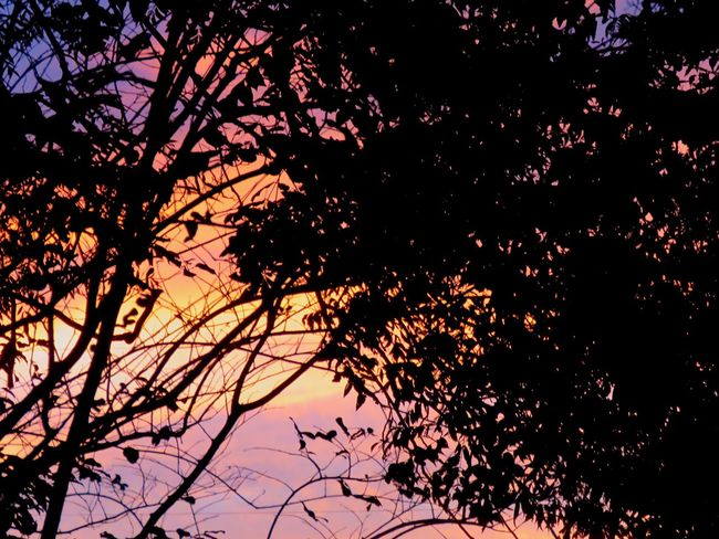Every sunset is beautiful. Tree Silhouette Nature Branch Low Angle View Beauty In Nature Growth No People Sky Outdoors Scenics Sunset Day