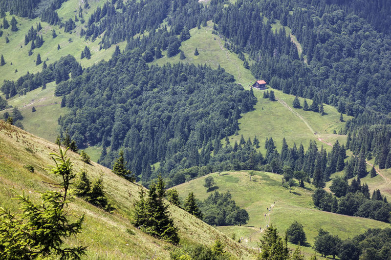 Velka Fatra Beauty In Nature Coniferous Tree Day Environment Forest Green Color Growth High Angle View Human Arm Idyllic Land Landscape Lush Foliage Mountain Nature Non-urban Scene One Person Outdoors Pine Tree Plant Rolling Landscape Scenics - Nature Tranquil Scene Tranquility Tree