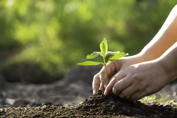 Save The World Seed Body Part Day Finger Focus On Foreground Green Color Growth Hand Holding Human Body Part Human Hand Leaf Lifestyles Nature One Person Outdoors Plant Plant Part Planting Real People Sapling Unrecognizable Person World Environment Day