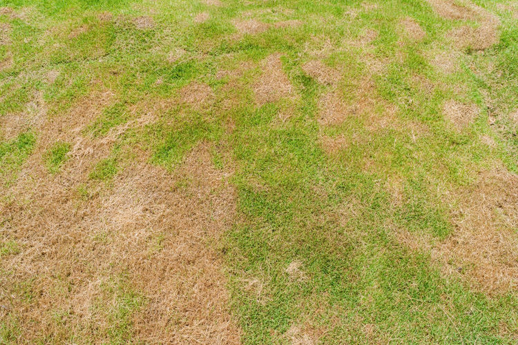 High angle view of grass on land