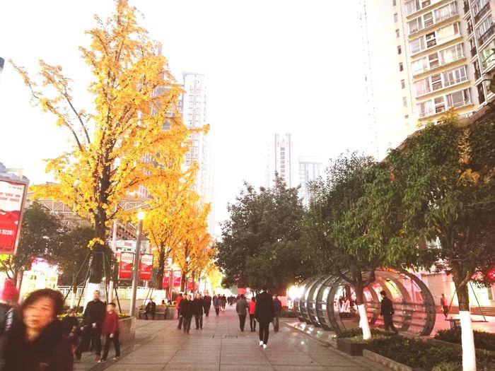 傍晚拍的,光线不好。一边秋天一边春天。ps:什么时候白天去拍一次 City People Tree first eyeem photo
