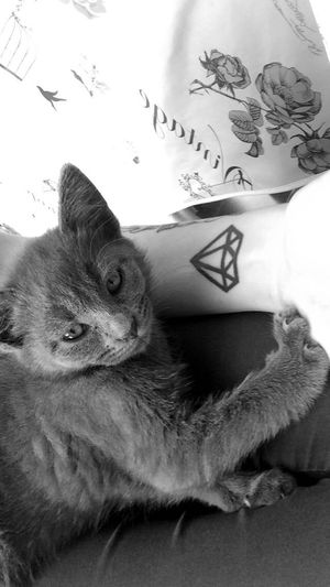 Mybaby Cat Check This Out Hello World Taking Photos Beautiful Tattoo That's Me Pets Blackandwhite