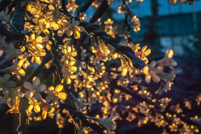 Sunset Flowers Branch Sunbeams Novokuznetsk Kuzbass Siberia Russia Creative Light And Shadow