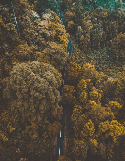 Yellow plants and trees in forest during autumn