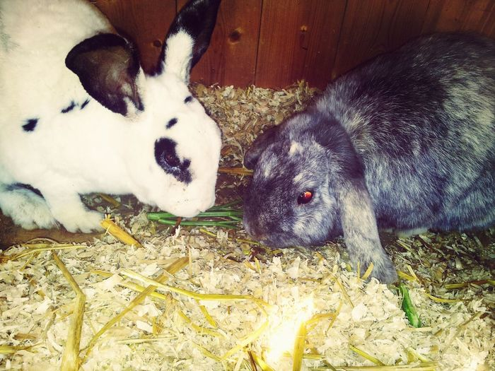 my little love! Rabbits Love ♥ Animals Sweetest Couple ♥