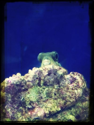 水族館 Fish