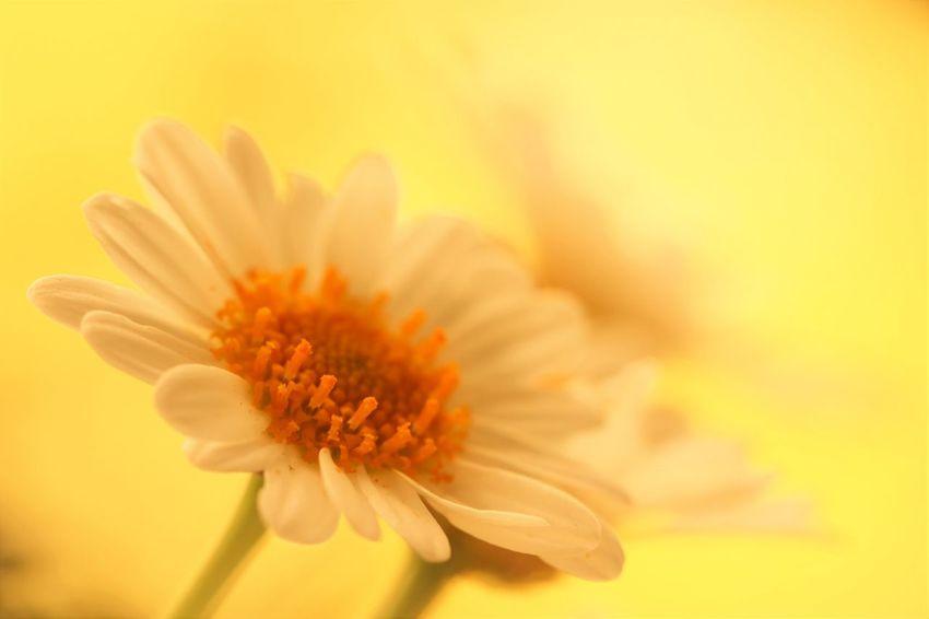 🌼WAS DIE SEELE BRAUCHT🌼 Sie braucht einen Platz, auf dem sie steht - sie braucht einen Freund, der mit ihr geht. Sie braucht ein Tun, das sie täglich erfreut - sie braucht die Stille, Besinnlichkeit. Sie braucht Musik, die empor sie hebt - sie braucht Freude, solang´ sie hier lebt. Sie braucht den Fortschritt, das Wachstum, den Geist - sie braucht ein Lied, das Vollkommenheit heißt. Sie braucht der Liebe wärmendes Kleid - sie braucht den Frieden, die Heiterkeit. Sie braucht eine Zeit, die dem Schöpfer sie weiht - zum Horchen und Ahnen der Ewigkeit. (Unbekannt) Edited My Way Every Flower Is A Soul EyeEm Best Edits EyeEm Flower EyeEm Nature Lover Flower Head For My Friends That Connect Forever Freshness From My Point Of View Ladyphotographerofthemonth Lovely My Garden Is A Wonderland My Unique Style Poetry POETRYANDSOUL Romantic Selective Focus Untamed Heart