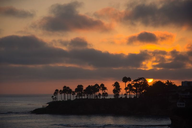 The Great Outdoors With Adobe The Great Outdoors - 2016 EyeEm Awards Sunset California Ocean Ocean View Pacific Ocean Palm Trees