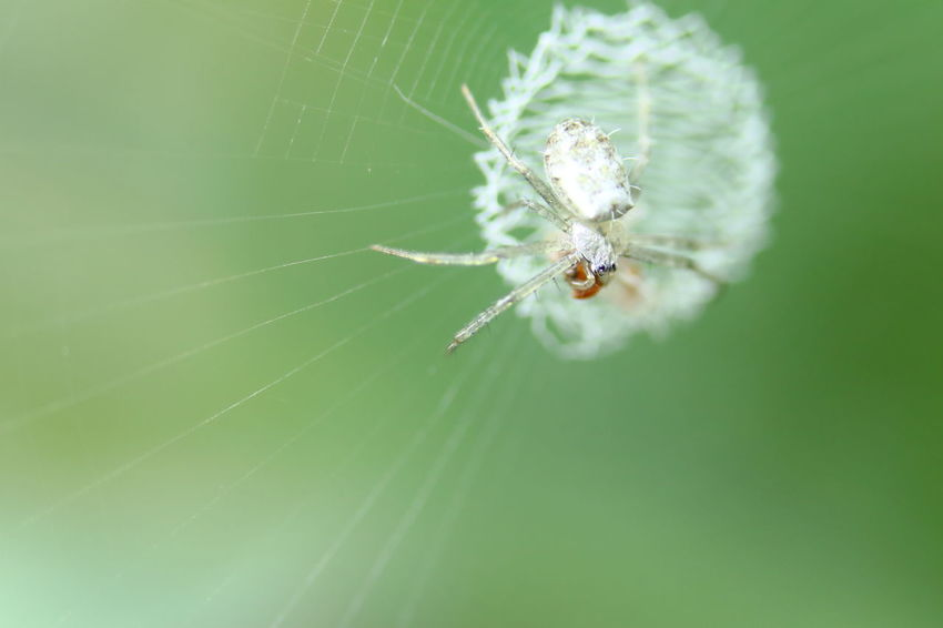 Animal Animal Themes Animal Wildlife Animals In The Wild Arachnid Arthropod Backgrounds Close-up Day Focus On Foreground Fragility Insect Invertebrate Nature One Animal Outdoors Selective Focus Spider Spider Web Vulnerability  Wallpaper Web
