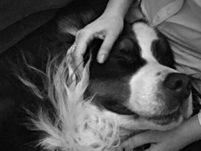 A dog is the only thing on earth that loves you more than he loves himself ? My Dogs Are Cooler Than Your Kids I Love My Dog Relaxing Blackandwhite Animals Bernese Mountain Dog Taking Photos Cute Pets Animal_collection