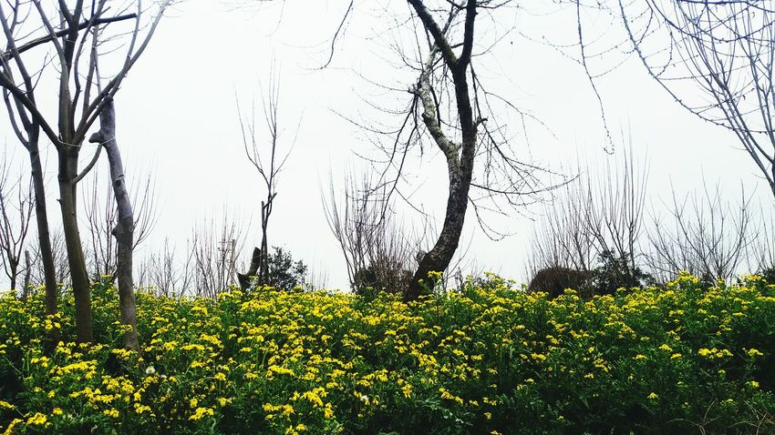 چای باغ سفرتايم دوستان Yellow Flower Yellowflower سفر ابری آسمون درخت زرد سویا قایمشهر مازندران Mazandaran Iran Irantravel Trees Tree Cloud Picture Love MyPhotography Myiran Shomal, Iran Travel Photo Whitelove Iranian چای_باغ