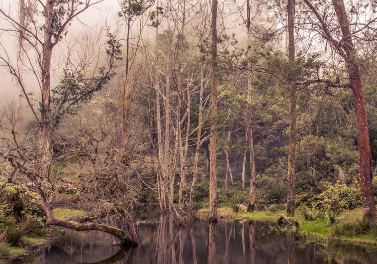 Mystic forest Nature Pond Beauty In Nature WoodLand Stream Bare Tree Reflection Growth Non-urban Scene Scenics Branch Tranquil Scene Vacations Water Wilderness Forest Day Tree Trunk Tranquility Tree India kodaikanal