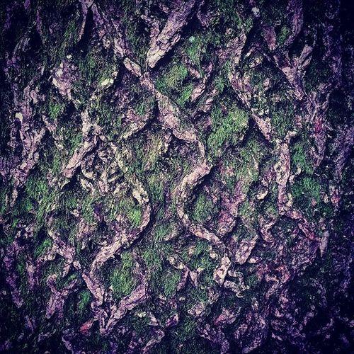 Bark Moss Tree