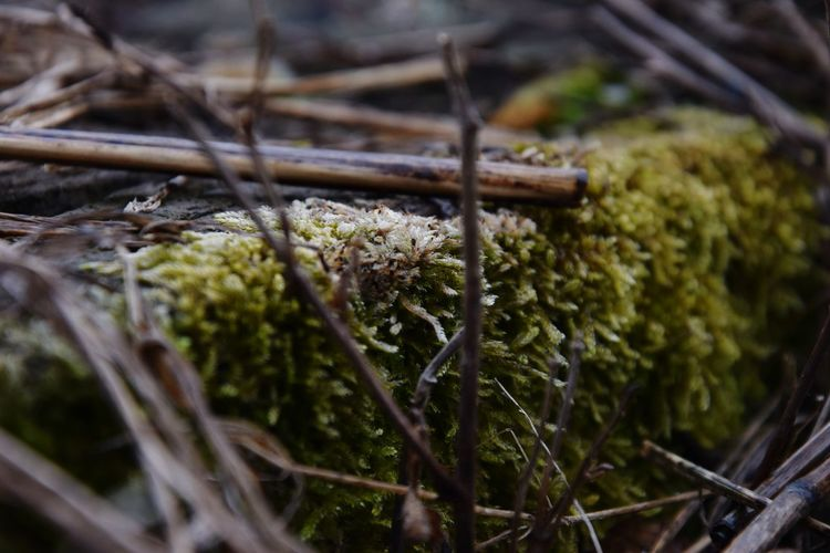 Fluffy Moss Plant Close-up Outdoors Cold Temperature Railway Track Nature_collection Focus On Foreground Nature Photography Nature