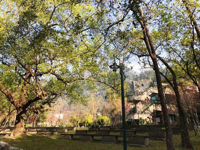 谷關溫泉 Tree Plant Architecture Built Structure No People Nature Outdoors Day Building Exterior Fence Barrier Growth Sky Low Angle View Building Boundary Sunlight Pattern Security Cloud - Sky
