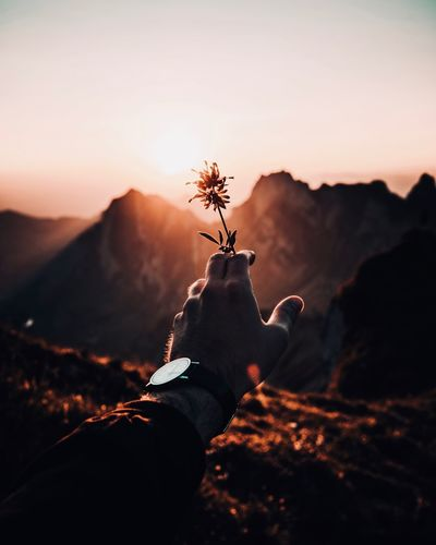 Cropped hand of man holding flower on mountain against sky during sunset