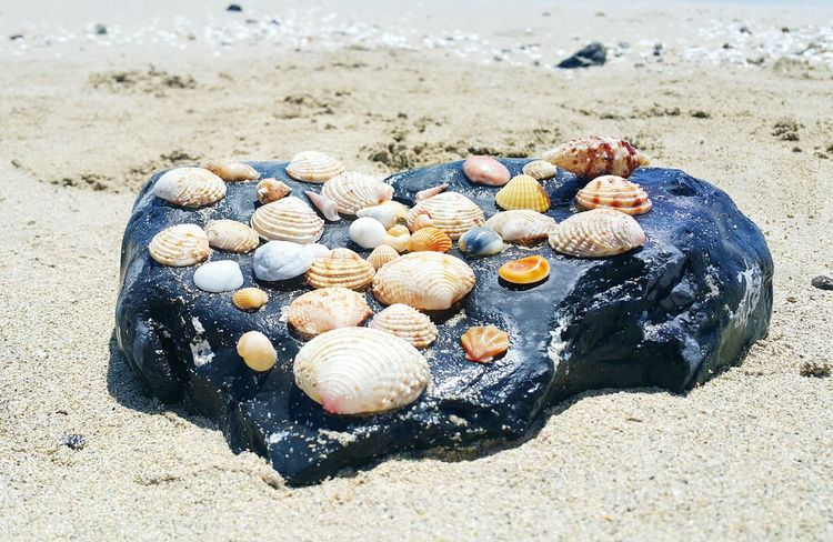 Shells Shell Beach EyeEm Selects Sea Life Sea Beach Sand Seashell Sunlight Water Hermit Crab Shore Animal Shell Shell Pebble Beach Clam Pebble Floating In Water