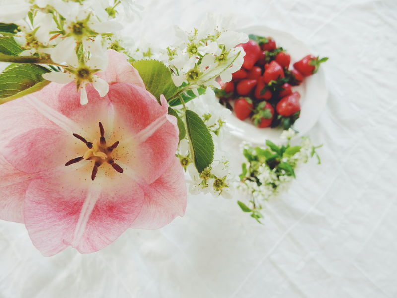 Flowers and strawberries Beauty In Nature Close-up Day Flower Focus On Foreground Fragility Freshness Green Color Growth Nature No People Organic Petal Pink Pink Color Pink Flower Plant Essence Of Summer Selective Focus Stem Still Life Strawberries Strawberry Tulip White Background