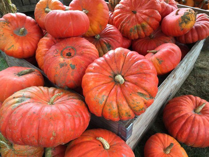 Full frame shot of pumpkins in market during autumn