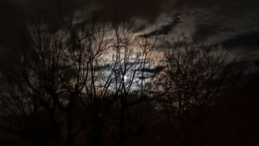 Silhouette bare trees against sky at night