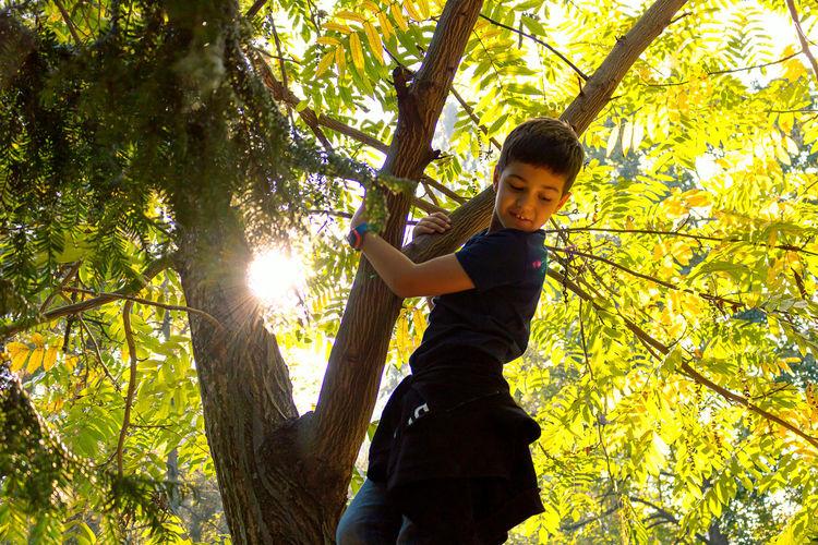 Portrait of boy on tree trunk