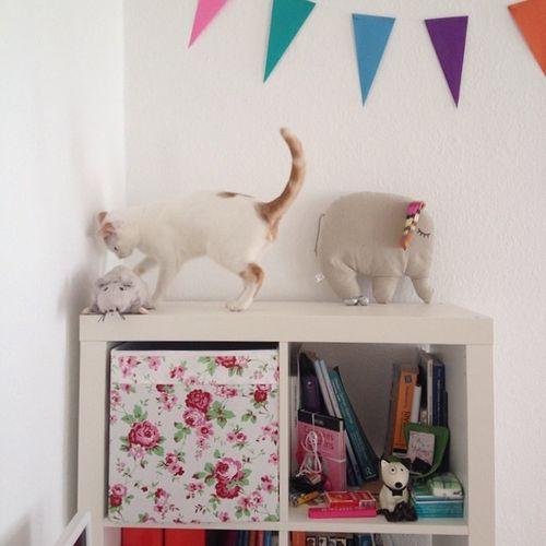 Home Sweet Sweetness Naif pastels cat tofu ikea white light instahome instacat