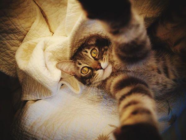 Tam bir gerizekalııı💕 Cat Cute Little Sweet