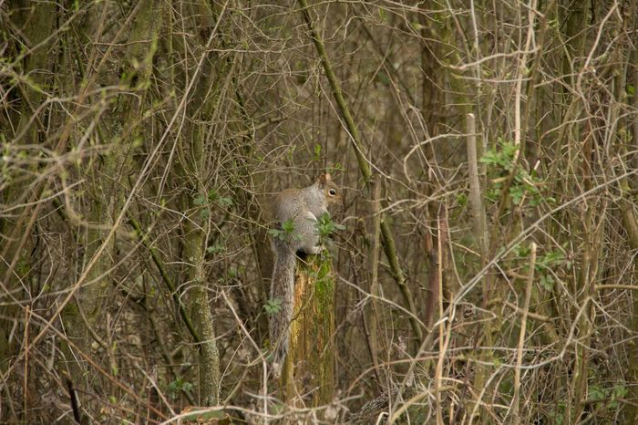 The Grey Squirrel Grey Squirrel Squirrel Wildlife & Nature Wildlife Nature Trapped Spider Web Spider Close-up