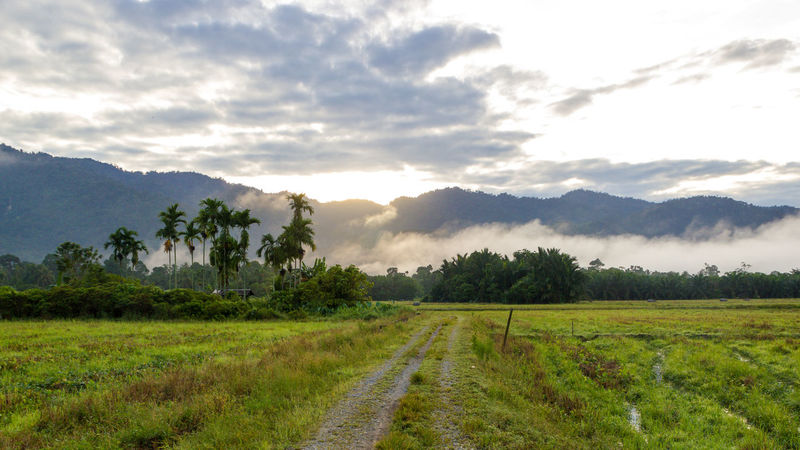 sunrise and fog Perak Taiping A Agriculture Batu Kurau Beauty In Nature Cloud - Sky Day Field Grass Green Color Growth Landscape Malaysia Mountain Nature No People Outdoors Scenics Sky The Way Forward Tranquil Scene Tranquility Tree