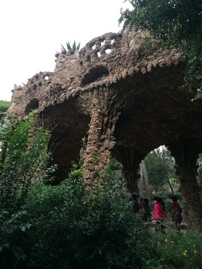 Barcelona, Spain Park Guell Gaudi Skate Photography: Same Tricks, New Perspectives Tree History Ancient Old Ruin Tree Trunk Architecture Grass Sky Needle - Plant Part Growing Young Plant