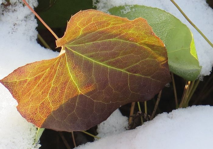 Outdoors Photography Leafes Shadows & Lights Macro Photography Naturelover Switzerland Wintertime