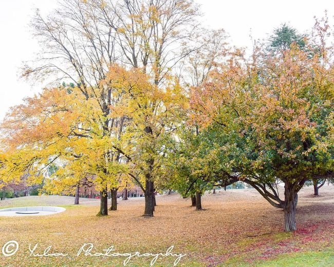 Tree Plant Autumn Growth Change Beauty In Nature Day Nature Sky Tranquility Field Scenics - Nature Outdoors No People Land Landscape Branch Yellow Park The Great Outdoors - 2018 EyeEm Awards