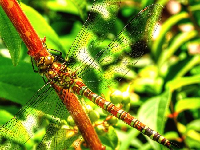 Nature Nature_collection Nature Photography Dragonfly Insect Garden