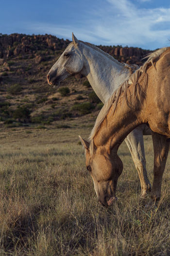 Interestin shot of two horses in rugged west texas.