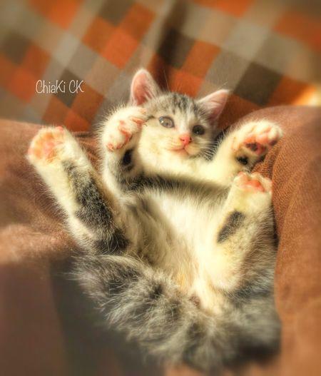 Cute Pets My Pets My Cat Cute Cat.  Cute Cats Cute Cat Cat Animals