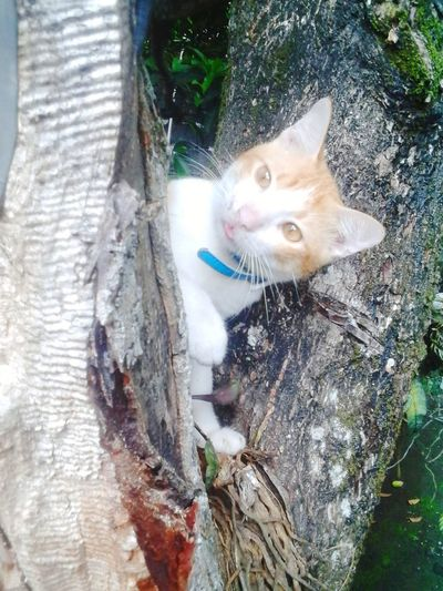 Bleeh! ^__^ Pets Corner Cute Cats EyeEm Cute Cats Light And Shadows Pet Photography  Pet Lover Naughty Cat FUNNY ANIMALS My Funny Cat EyeEm Cats