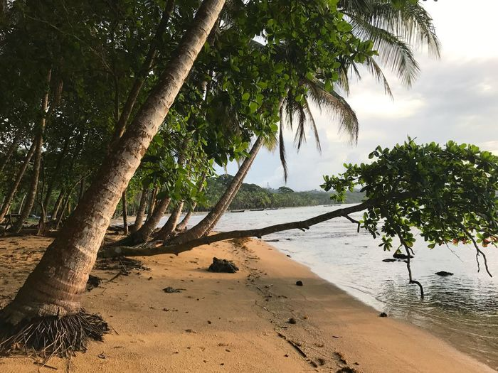 Been There. Costa Rica Caribbean Tree Nature Scenics Beauty In Nature Tranquil Scene Tranquility Tree Trunk Palm Tree Outdoors Water No People Beach Landscape Sea Branch Sand Sky Day