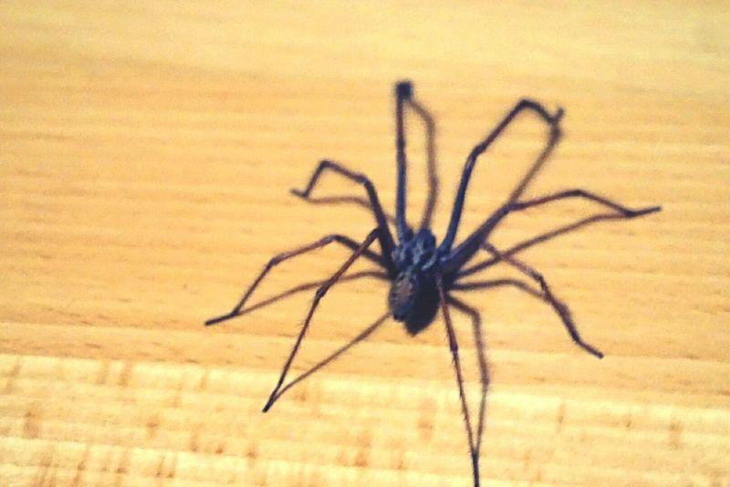 Spider Horror Taking Photos Scary France Hello World Photooftheday Weekend Hi! Like