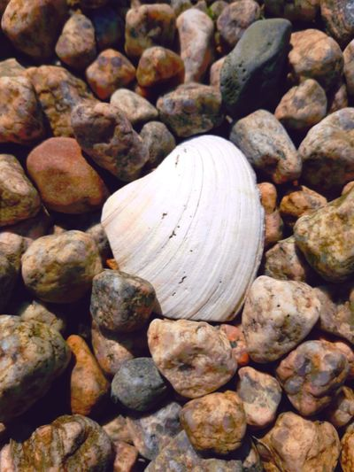 Stones. Beach