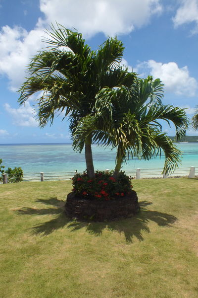 Guam Life Guam Lif Guangzhou Palms Beach Beauty In Nature Cloud - Sky Day Grass Green Color Growth Guam Guitar Horizon Over Water Nature No People Outdoors Palm Tree Scenics Sea Sky Tranquil Scene Tranquility Tree Water